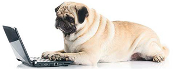 Pug researching types of mange